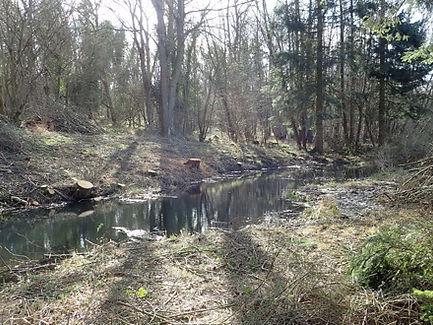 Richard's Pond.jpg