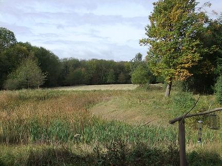 Fineshade Wood Hide Pond overgrown.jpg