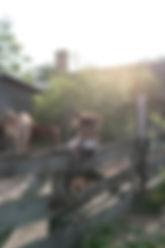 Garten-91.jpg