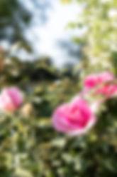 Garten-103.jpg