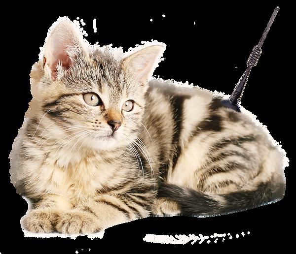 Katze mit Antenne.png