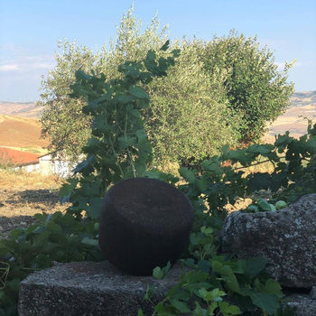 Nero di Sicilia