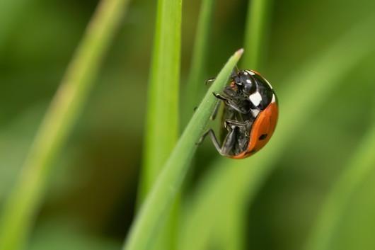 Ladybird 26.07.2020.jpg