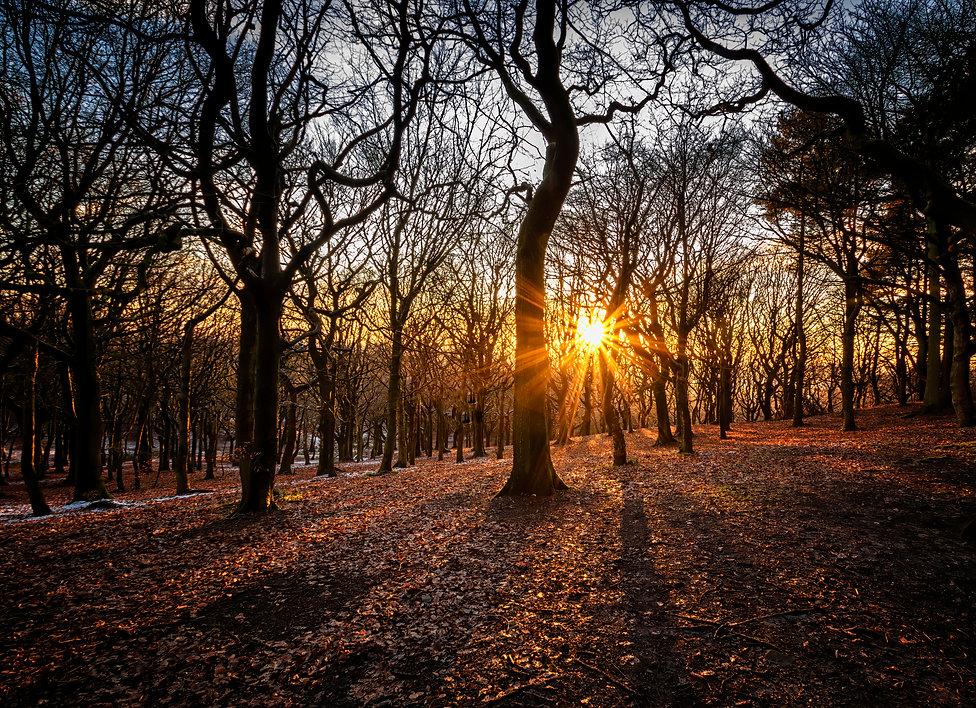 Woodland Sunset mk2.jpg