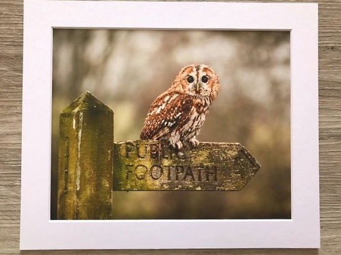 Owl & Sign post