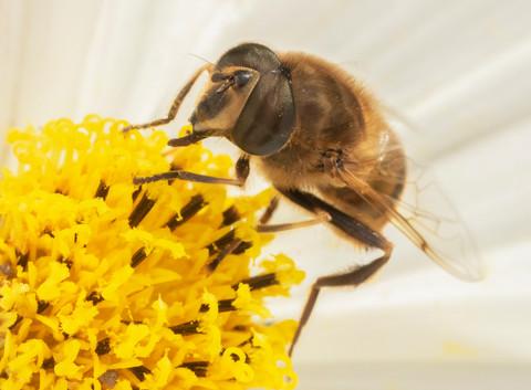 Bee hard at work.jpg