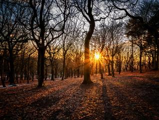 Woodland Sunset.jpg