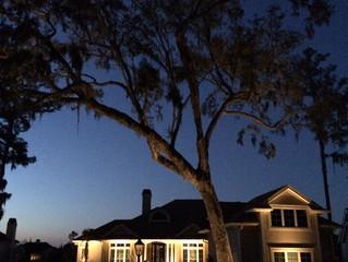Illuminating Live Oaks