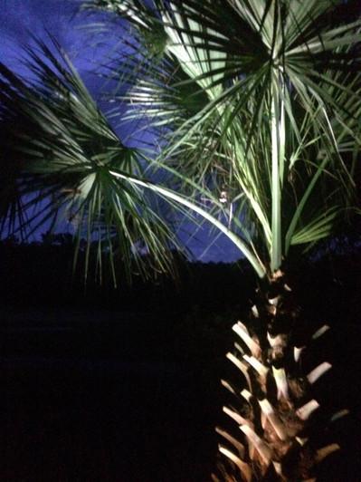 Landscape Lighting Hilton Head South Carolina