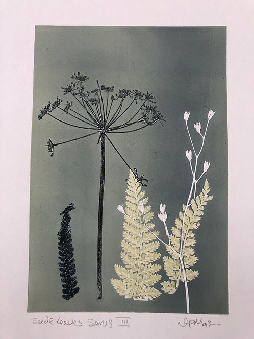 'Seed Head and Leaves' Original Mono Print