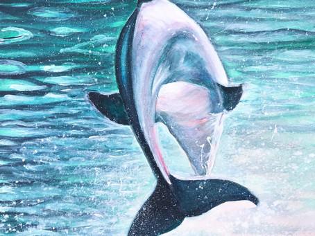 'Dolphin - freedom'