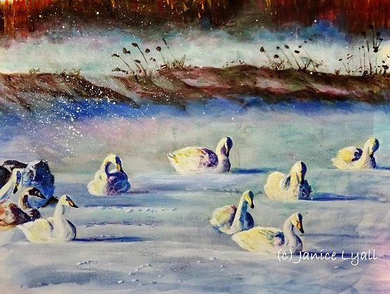 'Bewick Swans on the Frozen Lake'