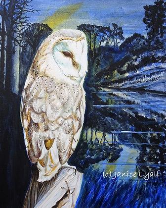 'Barn Owl Watching'