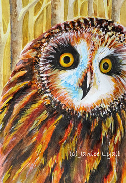 Eyes Wide Open Short Eared Owl