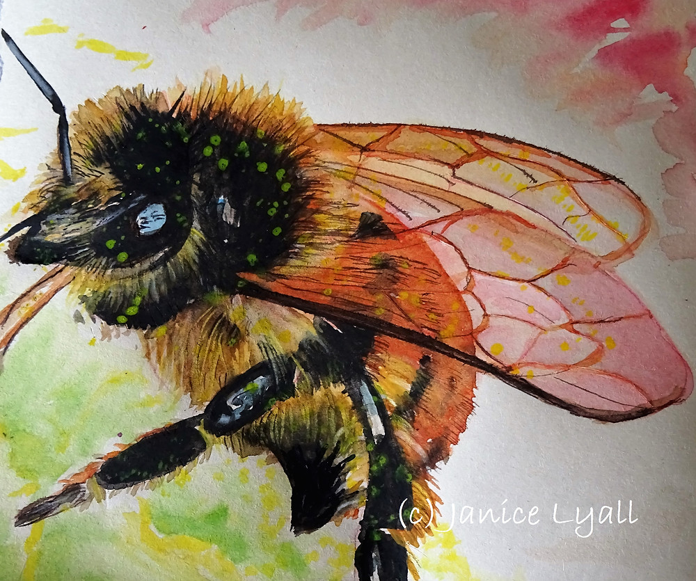'Flight of the Bumble Bee' Janice Lyall painting of bee collecting nectar