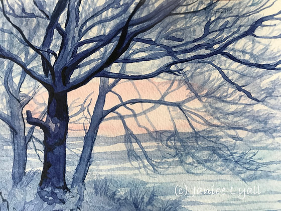 'Trees in Winter Colour'