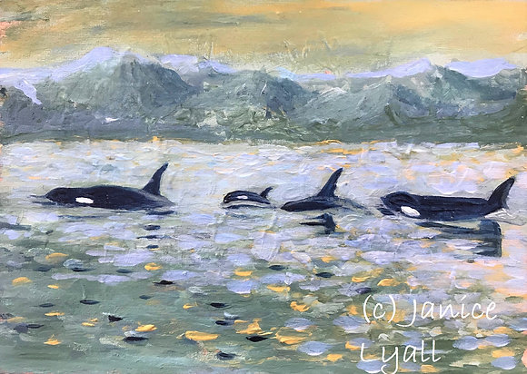 'Whale of a Swim'