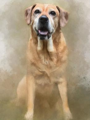 Rachels dog 12x16_Canvas.jpg