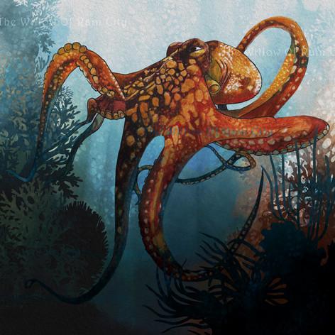 Octopus2_Socialm.jpg