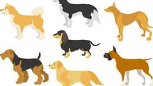 """なぜ """"I have dog"""" はおかしいな英語なのか~VBAのクラスモジュールを使ってオブジェクト指向的に英語の世界観を考える~"""