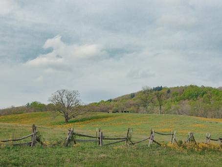 A quiet walk in spring.  5-2-19