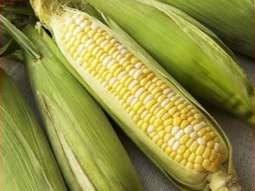 12 Corn on Cob