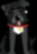 The Bob: a black dog