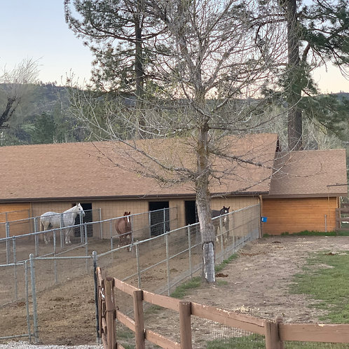Parkman Ranch- Horse Turn Out (Per Horse)