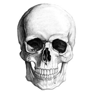 skullpencil_large.jpg