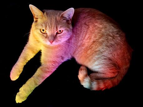 Rainbow Ripley.jpg