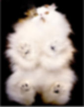 under cat.jpg