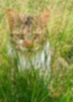 candid (next door's lawn).jpg