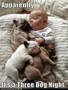 Two Dog Shortage