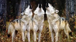 Tuesday's Top Ten: Favorite Wild Animals