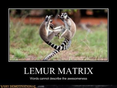 While the Lemur Is Away
