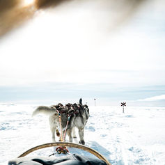 Fulufjället Hundspann97.jpg