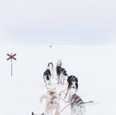 Fulufjället Hundspann5.jpg