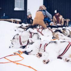 Fulufjället Hundspann14.jpg