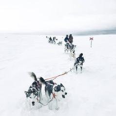 Fulufjället Hundspann3.jpg