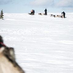 Fulufjället Hundspann81.jpg