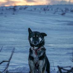 Fulufjället Hundspann32.jpg