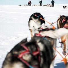 Fulufjället Hundspann108.jpg