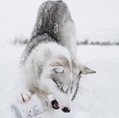 Fulufjället Hundspann15.jpg