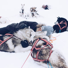 Fulufjället Hundspann35.jpg