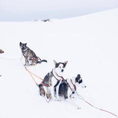 Fulufjället Hundspann13.jpg