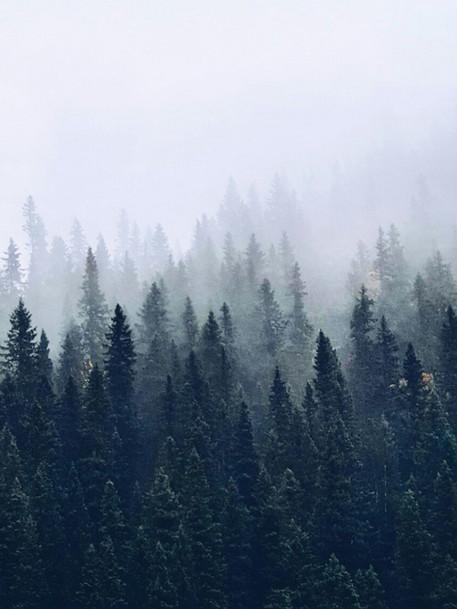 Mystisk dimma.jpg