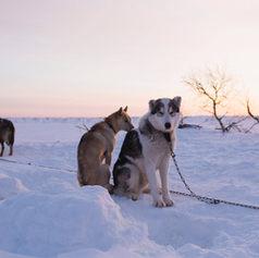 Fulufjället Hundspann44.jpg