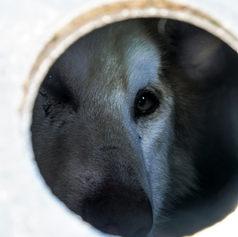 Fulufjället Hundspann69.jpg