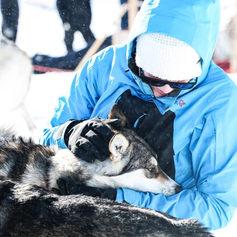 Fulufjället Hundspann99.jpg