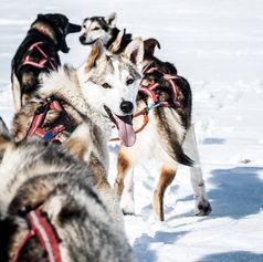 Fulufjället Hundspann113.jpg